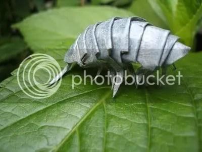 origami serangga, jepang