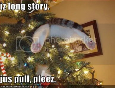 Now this is a funny cat in tree situation