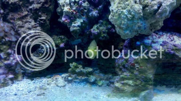 60 Gallon Cube Aquarium Setup