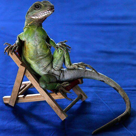 Dry Skin Lizard