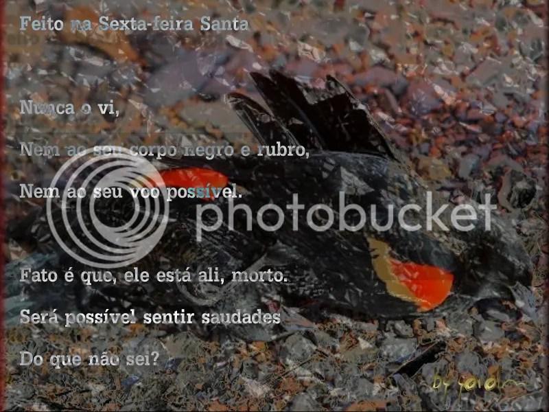 SCR31_Deadbird