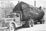 big log on truck