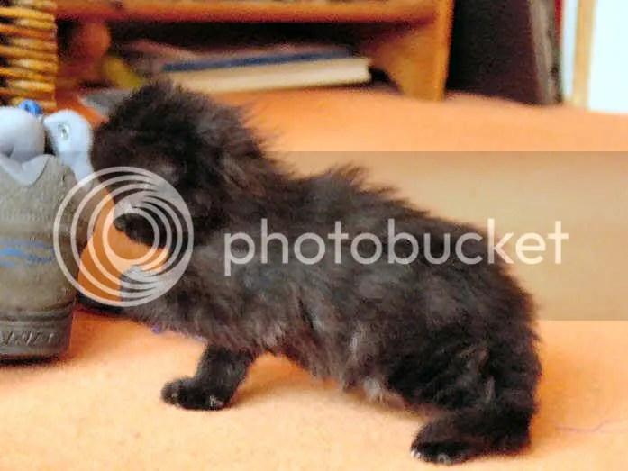 Jake as a Kitten