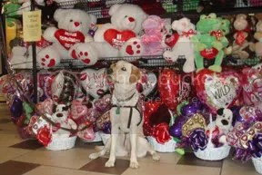 Gypsy at a Valentine Store