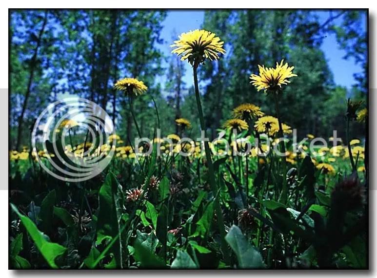 pesticide free - photo courtesy photobucket