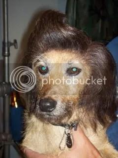 The dog in Ace Ventura Junior Pet Detective