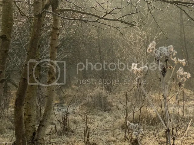 photo IMG_6251_zpsu6ht1dcp.jpg