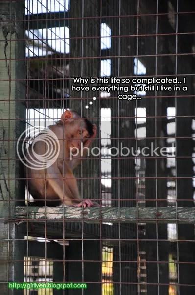 Monyet1