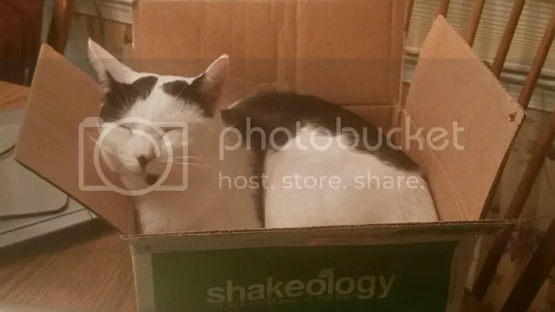 photo moo in a box_zpsl3gme57x.png