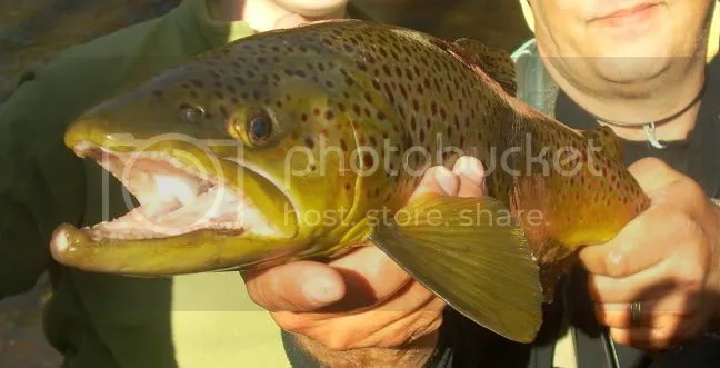 Crystals First Brown Trout _ 21