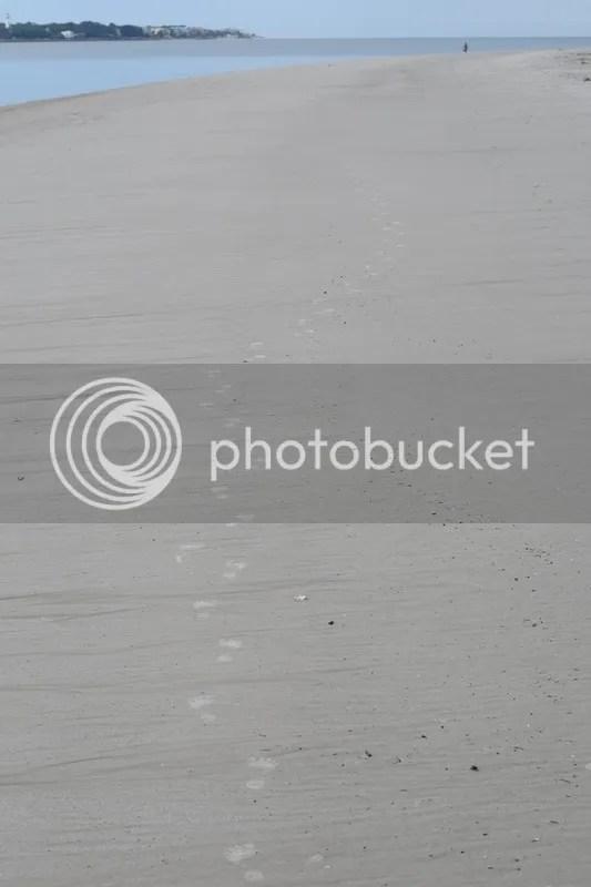 photo DSC_0563_zpsivskfc1j.jpg