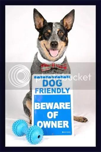 Dog Friendly Beware of Owner
