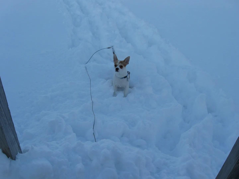 Lucky, snow dog