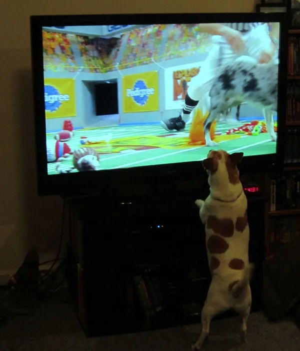 Lucky, Puppy Bowl IX viewer