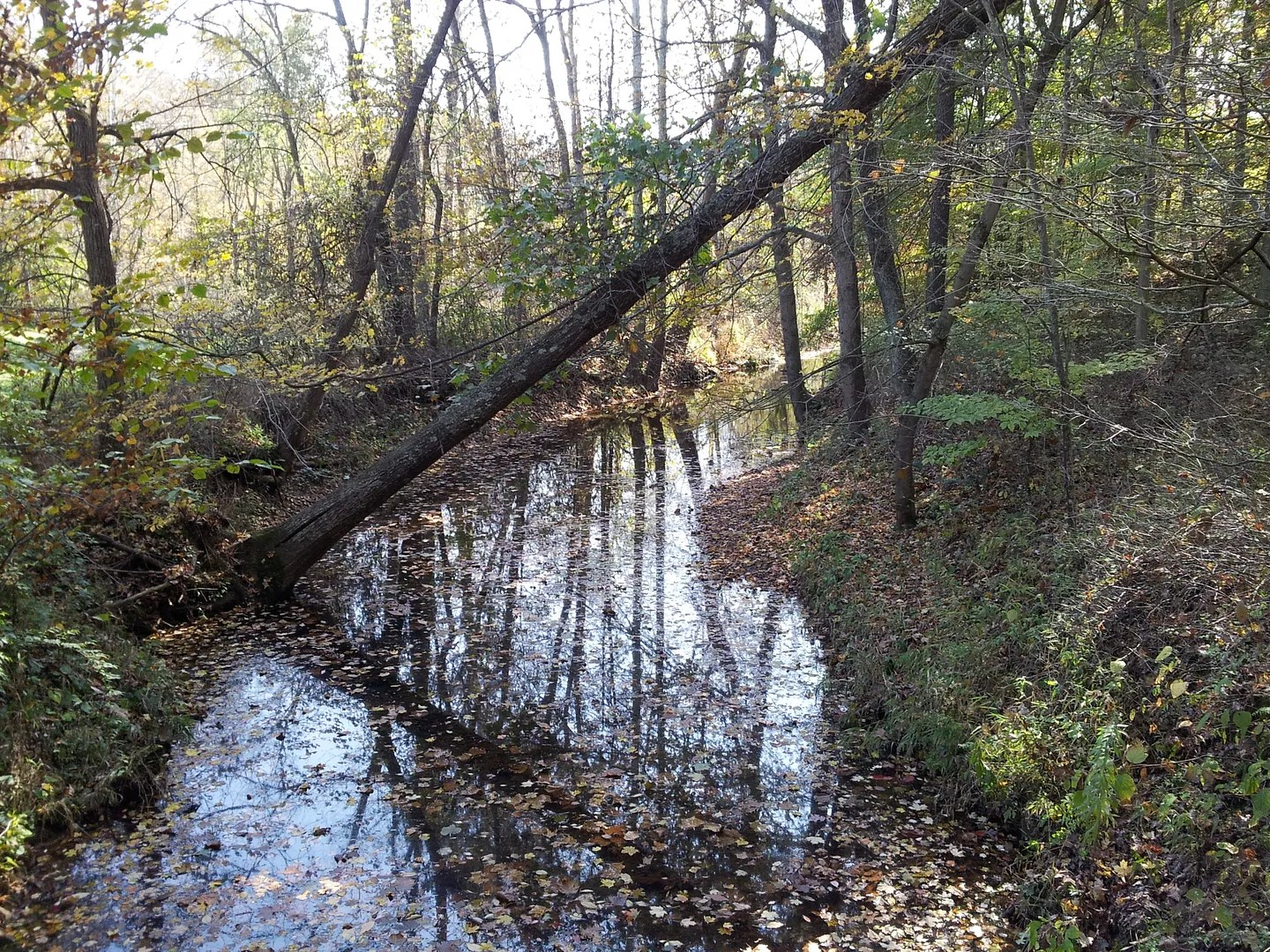 autumn creek, Birdseye, Indiana