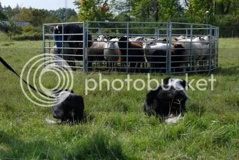 Liten och stor kollar på när jag kollar till fåren...:)