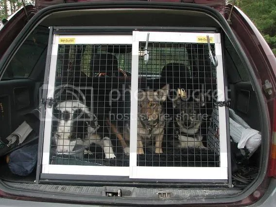 Tre hundar i bilen blir ganska trångt!