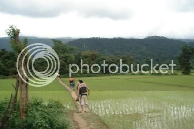 vang vieng cave rice paddy