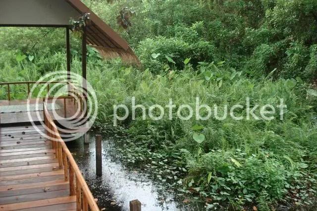 isara swamp