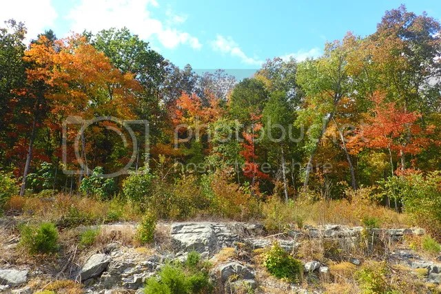 photo Fall colors_zpswffitqo8.jpg