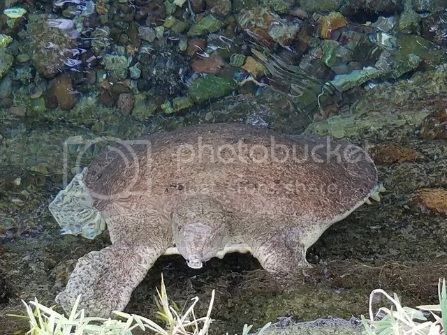 photo Marcia turtle_zpszp5xbdm5.jpg