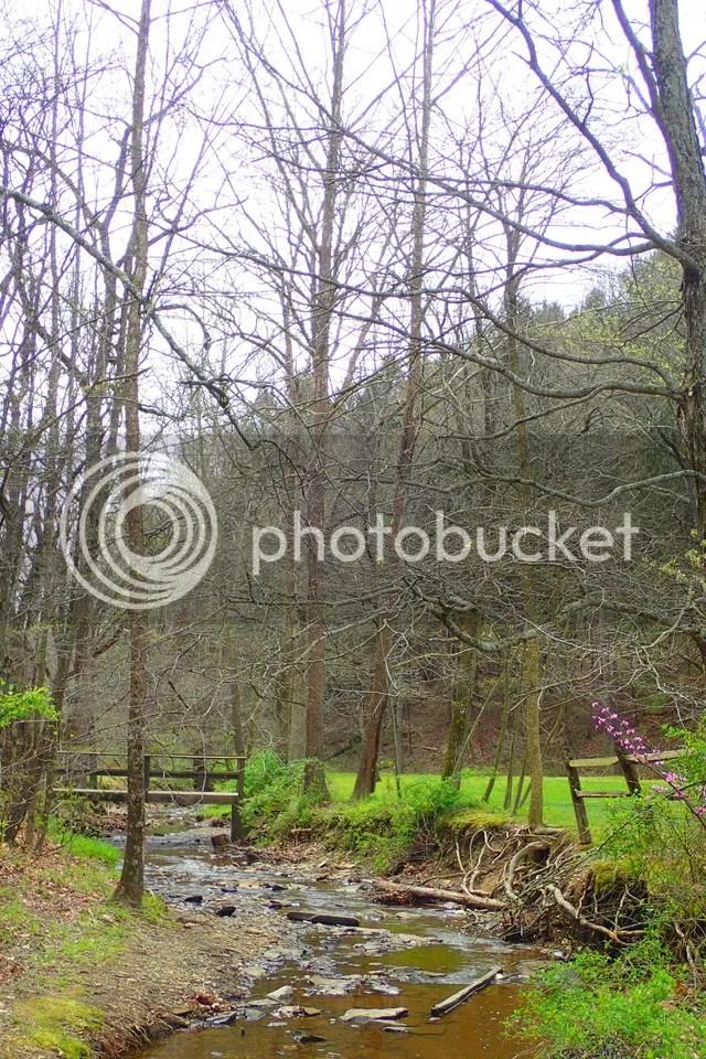 photo Creek 1_zpsvl0byj5y.jpg