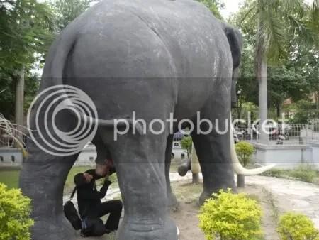 Gajah Pesing bertemu dengan replika saudaranya