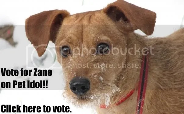 Vote for Zane!