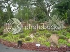 Cactus Again.