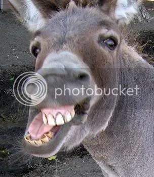 donkey ass photo: ass donkey.jpg