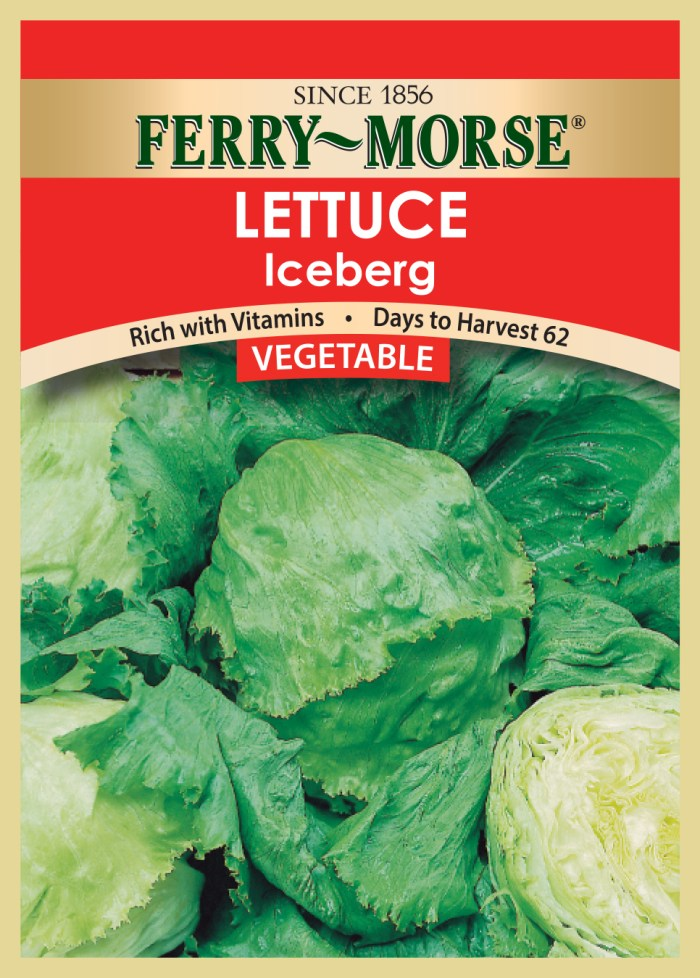 Vegetable seed Lettuce-Iceberg
