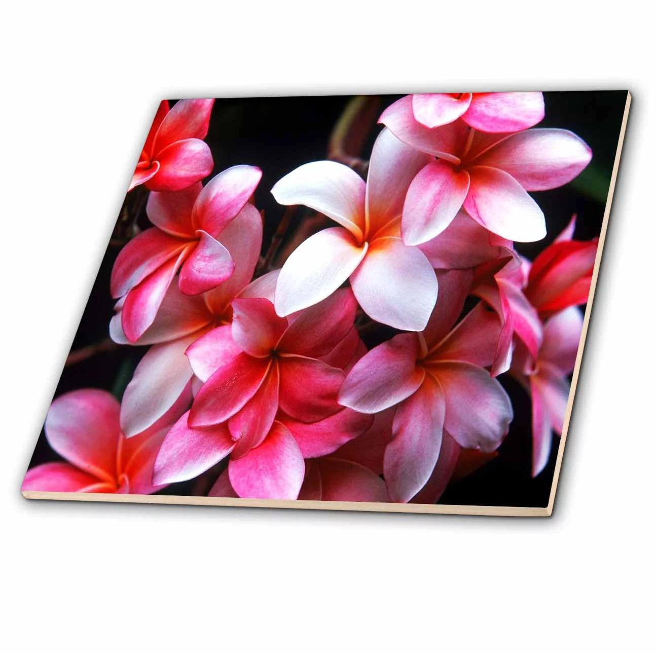 3drose hawaiian fuchsia colored plumeria flowers ceramic tile 6 inch