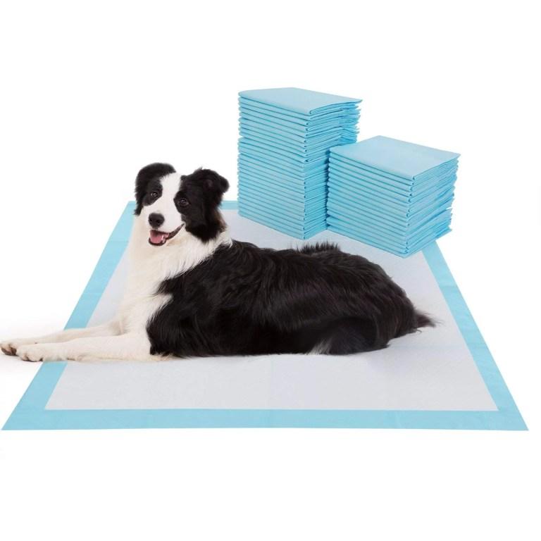 How Do Dog Training Pads Work?
