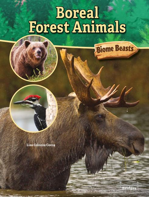 Similar to the vegetation, the animal life in the boreal forest is adapted to the cold climate. Biome Beasts Boreal Forest Animals Paperback Walmart Com Walmart Com