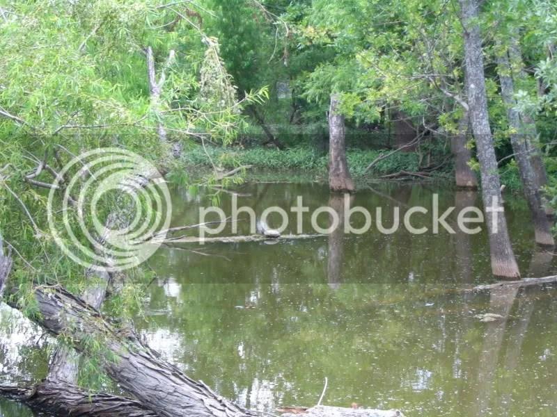 Turtle Sunning On A Log