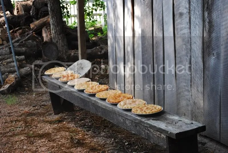 Pies Cooling on a Bench
