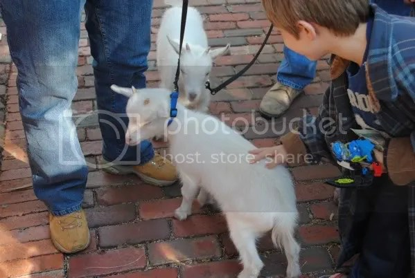 Collin and McKinney, The Chestnut Square Goats