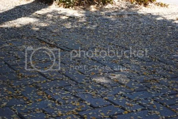 Tree Droppings