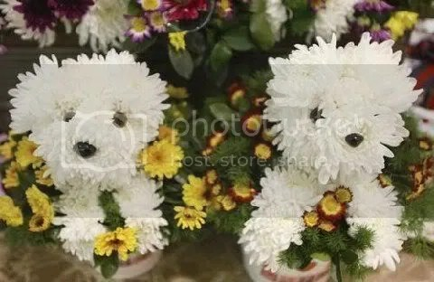 Make Puppy bouquets out of flowers! (3/4)