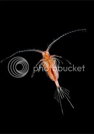 translucent zooplankton arndt 11513 Criaturas inacreditáveis do fundo do mar   parte 2   Curiosidades
