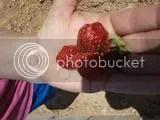 photo Picture0423161238951_zpsechztxwr.jpg