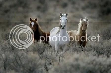 Yakama horses
