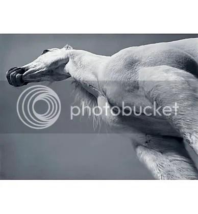 Trojan horse by Tim Flach
