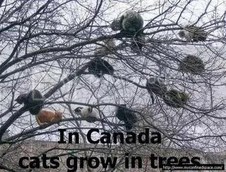 In Canada, cats grow on trees