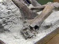 Prehistoric horse bones