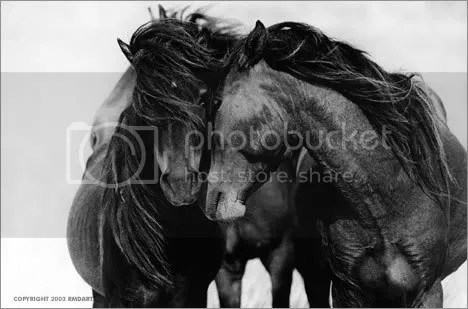 Sable Island horses at Dutesco Art