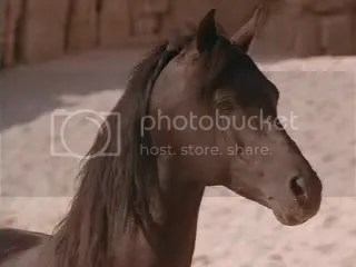 Cass Ole as the Black Stallion (from Wiki)