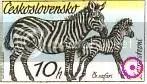 Zebra - Czechoslovakia