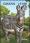 Zebra - Ghana
