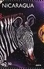 Zebra - Nicaragua